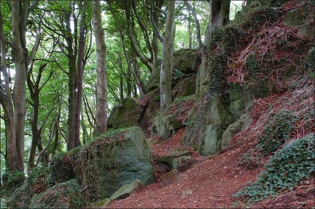 Killynether Wood near Newtownards (3)