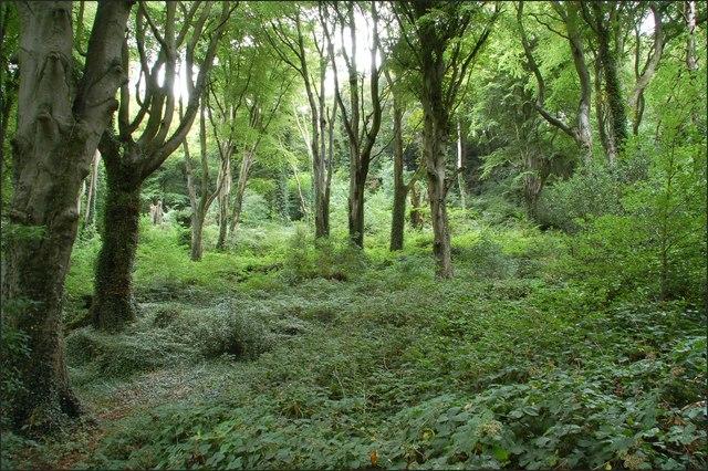 Killynether Wood near Newtownards (4)