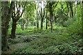 J4772 : Killynether Wood near Newtownards (4) by Albert Bridge