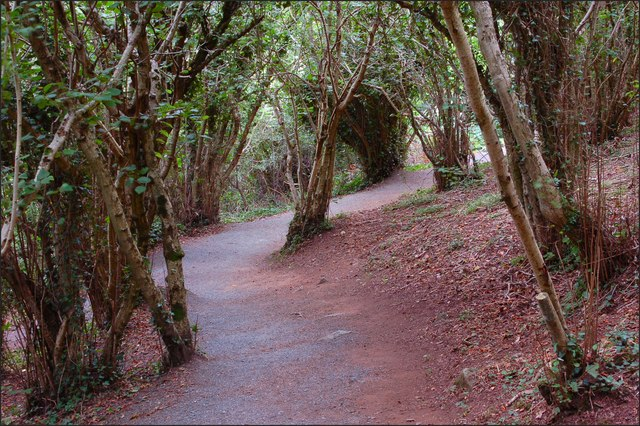 Path, Killynether Wood