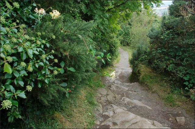 Path, Killynether Wood (2)