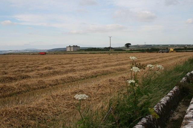 Fields near Loftus Hall