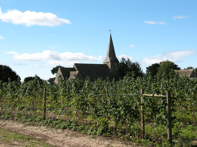 Raspberry canes and St Cuthberts.