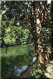 ST7265 : The River Avon at Newbridge, Bath by Philip Halling