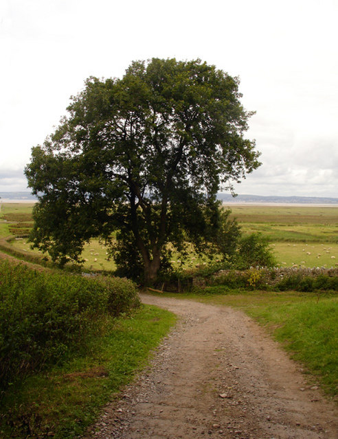 Lane to the Salt Marshes