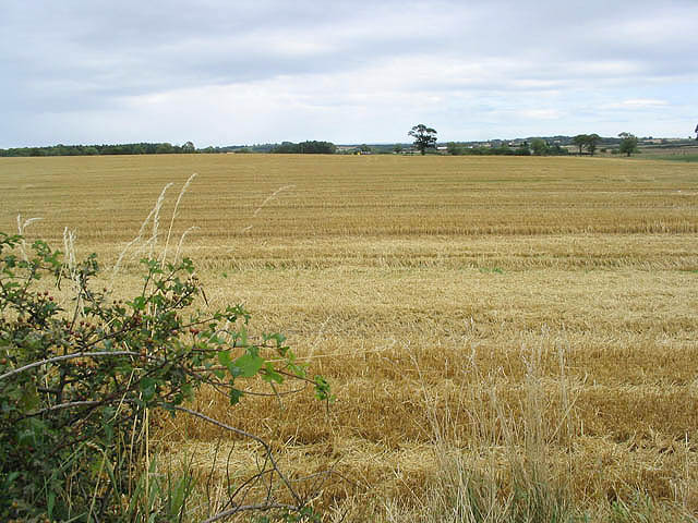 Stubble field viewed from the A697
