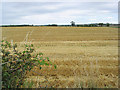 NZ1495 : Stubble field viewed from the A697 by Walter Baxter