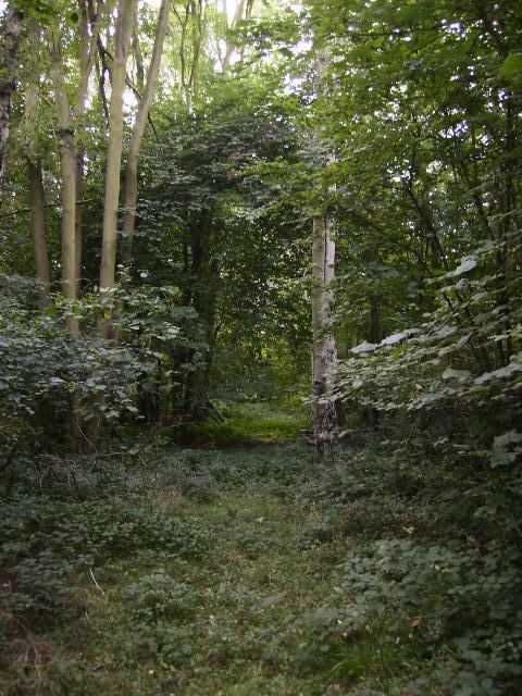 Inside Patefield Wood (2)