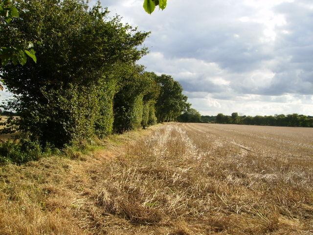 Stubble field and tree hedge south of Patefield Wood