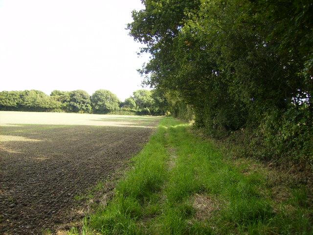 Field margin south of Patefield Wood