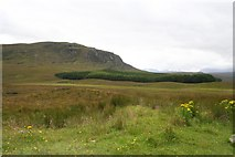 NH2276 : Forestry Plantation by Bob Embleton
