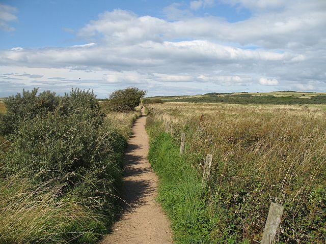 Yellow Mires path