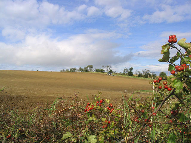 Arable farmland east of Wallington Newhouses