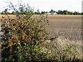 TL4094 : Farmland, Knight's End, March, Cambs by Rodney Burton