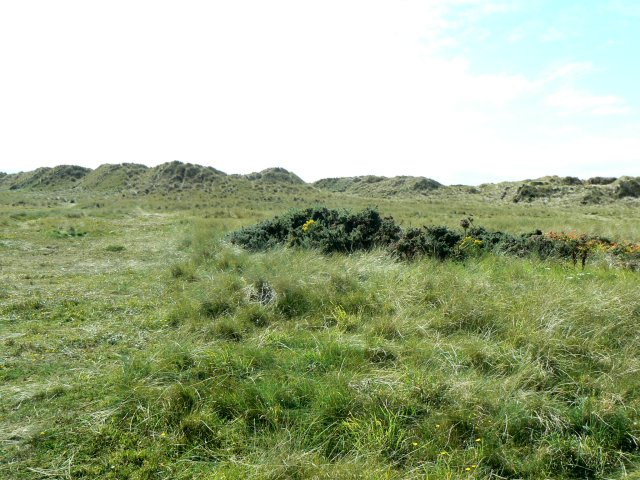 Overgrown sand dunes