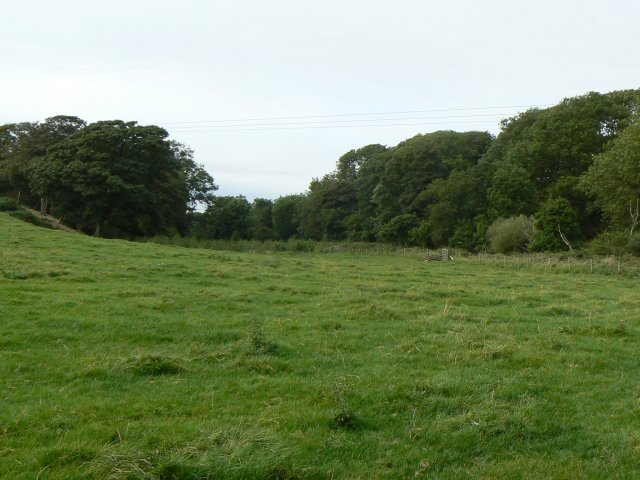 Trees beside the meadow