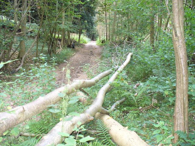 Sheepwalk Lane