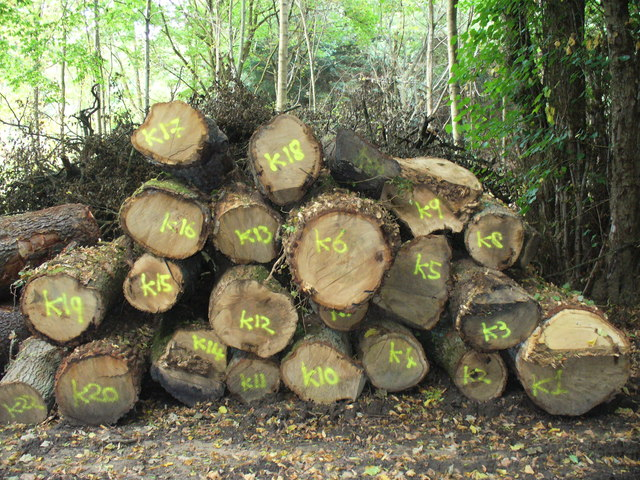 Timber by Troy Bridge