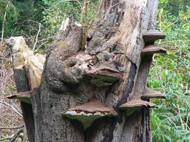 Bracket Fungi in Mountain Wood