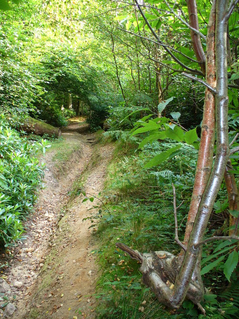 Bridleway in Mountain Wood