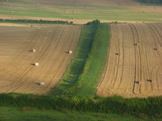 Farmland, Cerne Abbas