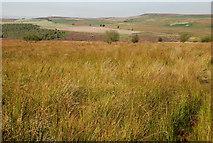SK2773 : Grassland below Birchen Edge by Roger Temple