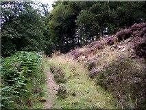 SK1789 : Track into woodland adjoining Ladybower Reservoir by Tom Pennington
