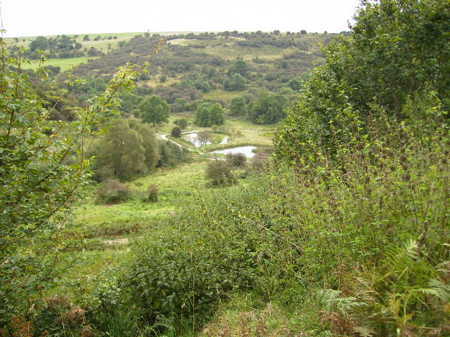 Man made ponds in Yowlass Wood