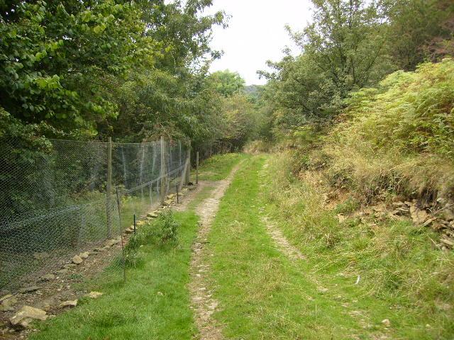 Unmapped track in Yowlass Wood