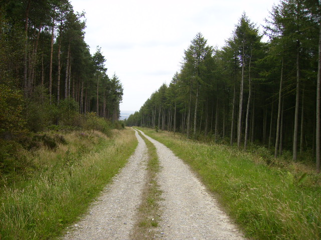 Forest track on Sproxton Moor