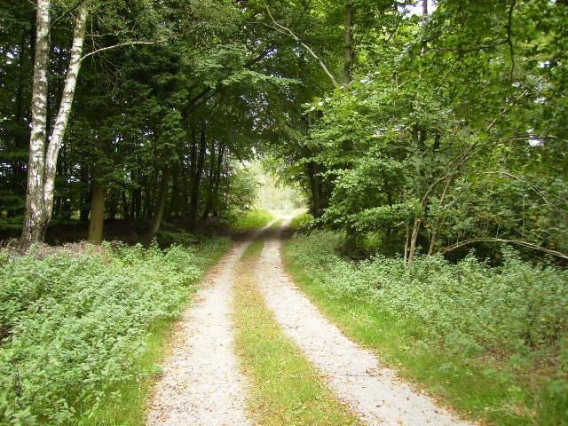 Deciduous trees in Sproxton Moor Plantation