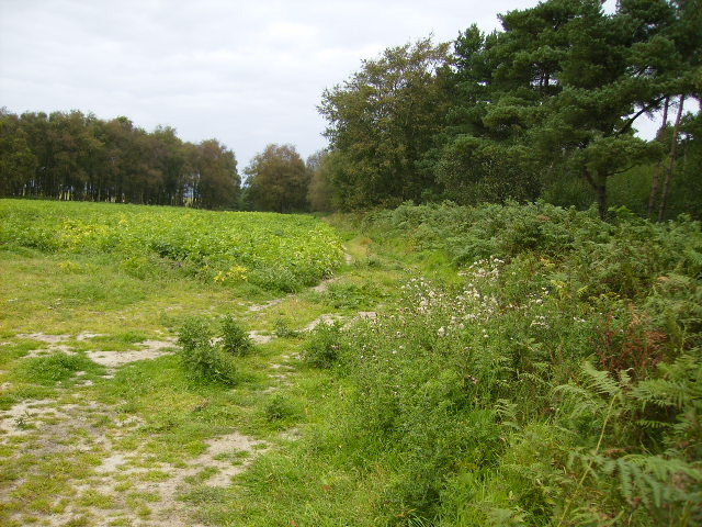 Forestry bordering Scawton Moor
