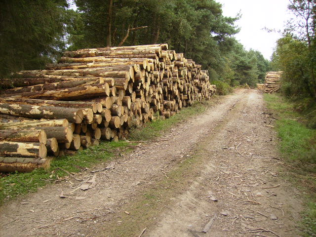 Logs harvested from Waterloo Plantation