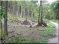 SE8353 : Coppiced Woodland by bernard bradley