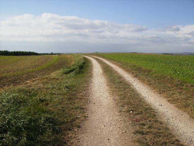 Track across Lebberston Carr