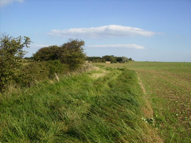Field margin on Lingholm Hill Lebberston Carr