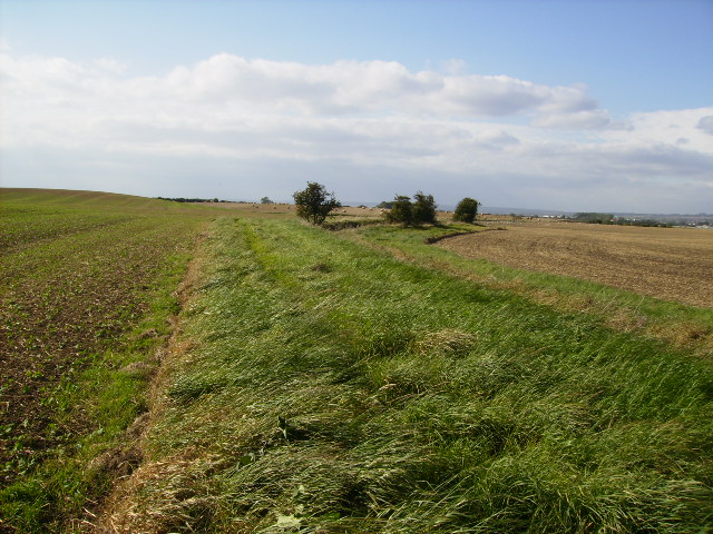 Field margin south of Lebberston Carr Farm