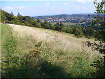 TQ1450 : North Downs at Ranmore Common by Colin Smith