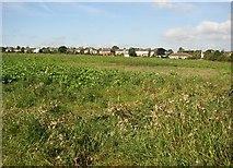 SE1421 : Smay Lees, Firth House Lane, Rastrick by Humphrey Bolton