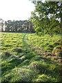 TM2290 : Autumn meadow in low light by Zorba the Geek