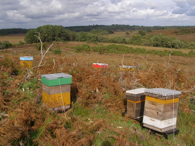 Bee hives on the heath, Duck Hole, New Forest