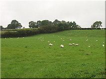 SJ2428 : Grazings near Pen-y-bryn by John Haynes