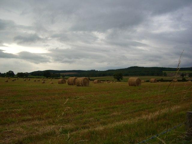 Farmland after haymaking