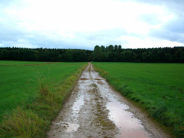 The road to Melkinthorpe Wood