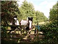 TL7196 : Horses on grazing level by Lisa Wild