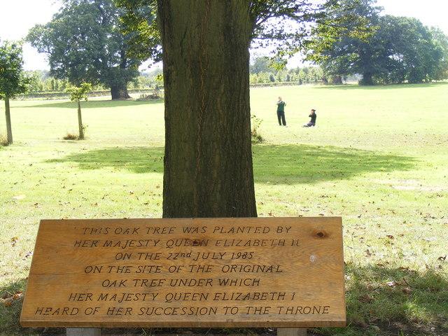 Elizabethan Tree near Hatfield House