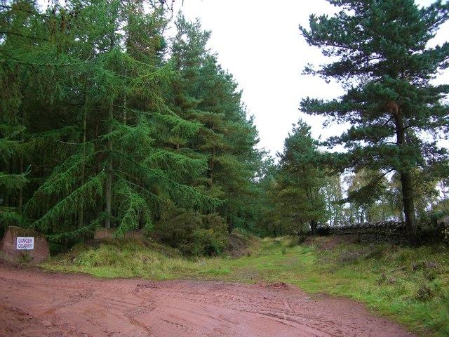 Woodland and quarry entrance