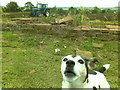 NX9974 : Tractor in a field, dog in the foreground by Darrin Antrobus