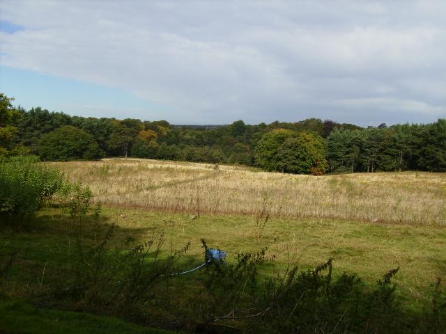 Open land in Lambton Park