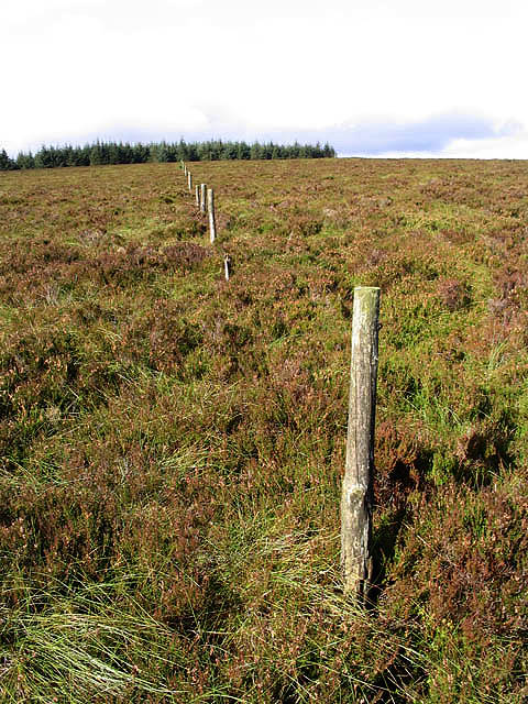 A line of old fence posts on Glendhu Hill